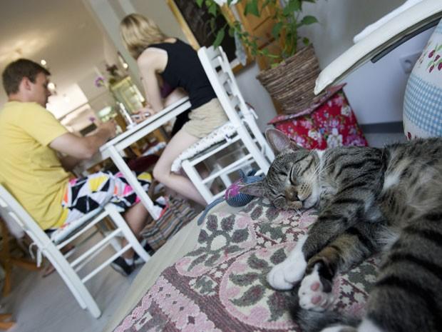 Clientes (ao fundo) comem no café para gatos (Foto: John Macdougall/AFP)