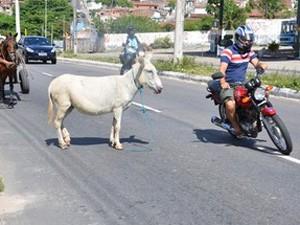 Acidentes causados por animais mataram 19 pessoas em 2012 (Foto: Walter Paparazzo/G1)