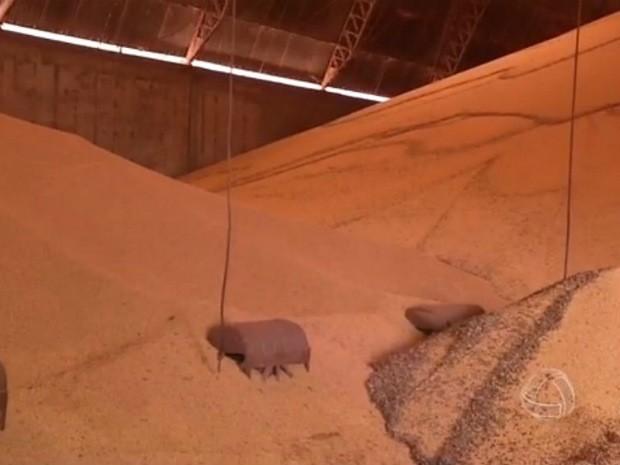 Safra 2014/2015 de soja já está nos armazéns de Mato Grosso do Sul (Foto: Reprodução/TV Morena)