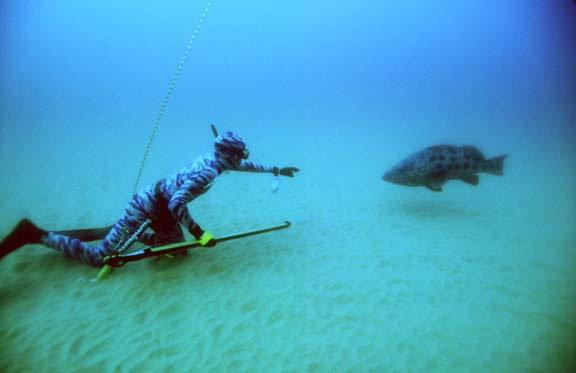 Mergulhador e pescador Francisco Loffredi campeão mundial de pesca submarina no mar (Foto: Arquivo Pessoal)