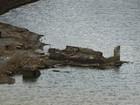 Construções submersas voltam a aparecer na Barragem de Jucazinho