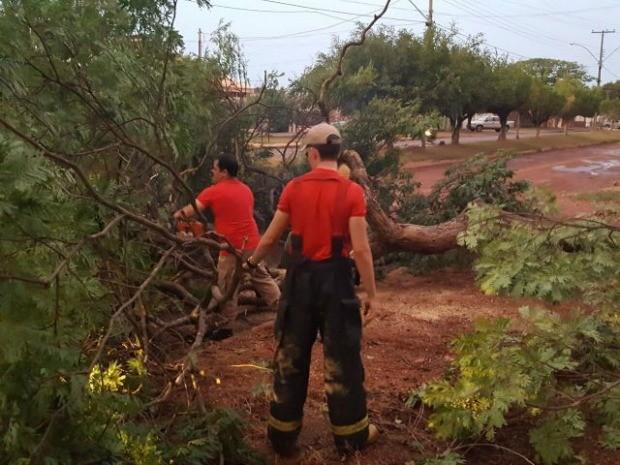 Bombeiros foram acionados para retirar árvores de ruas (Foto: Alerta Rolim/Reprodução)