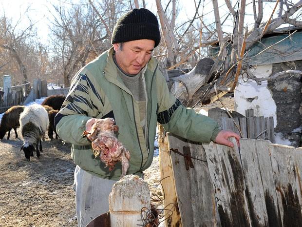 Para Bekitayev, a mutação foi causada por condições desfavoráveis da região onde fica a criação de cordeiros.  (Foto: VLADIMIR BUGAYEV/AFP)