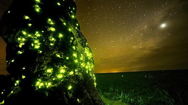 Do lado de fora dos castelos erguidos pelos cupins, larvas de besouros, primos dos vaga-lumes, vão cavocando seus buracos (Foto: BBC One)