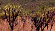 Temporada de chuvas traz o verde de volta à Floresta Nacional