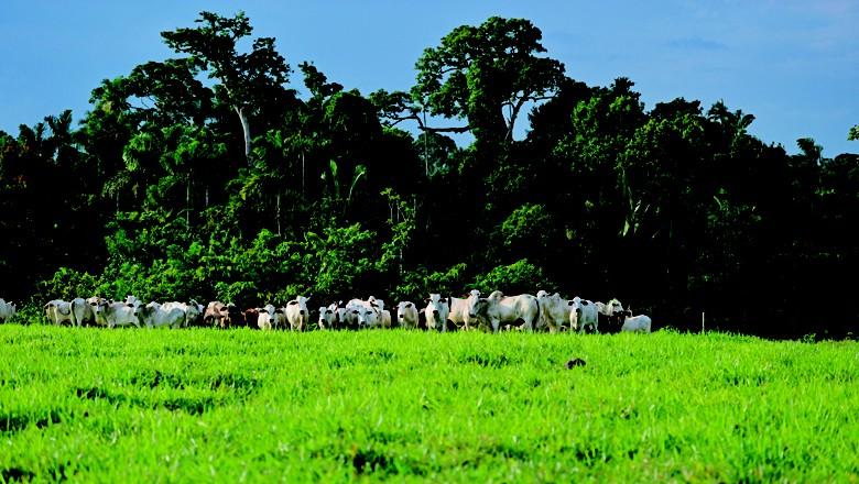 integração-lavoura-pecuaria-floresta-ilpf (Foto: Ernesto de Souza/Ed. Globo)