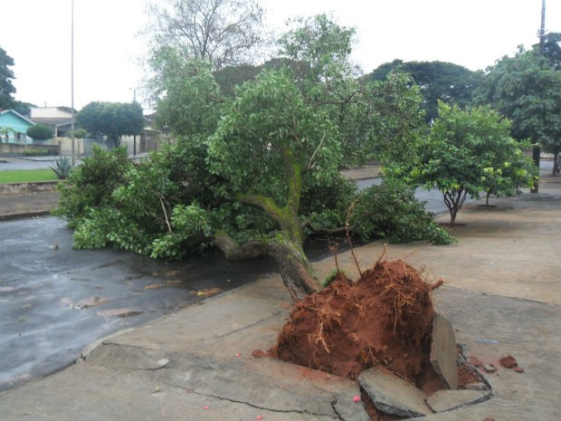 Moradora registrou a queda de uma árvore em Paranavaí (Foto: Maria de FAtima S. Bilches / Arquivo pessoal)