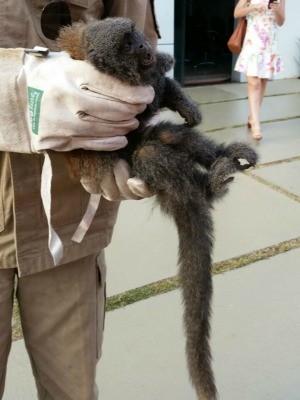 Macaco bugio é encontrado em garagem de casa em Vilhena (Foto: Luis Querubim/Arquivo Pessoal)