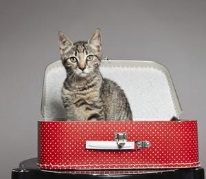 Levar ou não o gato na viagem de férias? (Foto: Thinkstock)