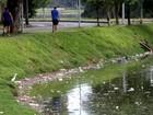 Poluição da Lagoa da Pampulha, em BH, preocupa Unesco que avalia título