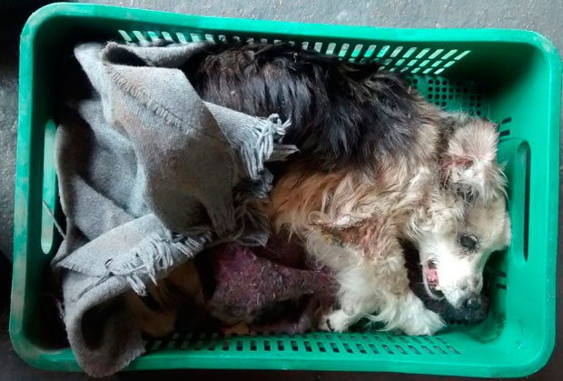 Cadela foi salva no bairro Cinquentenário, em Caxias do Sul (Foto: Divulgação/Corpo de Bombeiros)