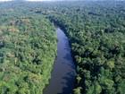 Senado aprova medida provisória que altera novo Código Florestal