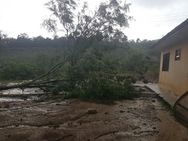 Árvore caiu ao lado de casa em propriedade rural de Ivaí, depois de rajada de ventos fortes (Foto: Anderson Rebinski/Arquivo Pessoal)