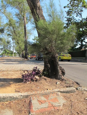 Lápide na árvore onde Dener bateu o carro e morreu, na Lagoa. (Foto: Gustavo Rotstein)