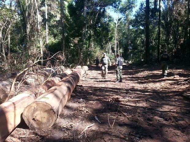 Militares durante operação Hiléia Pátria, em Rondônia (Foto: 6º Batalhão de Infantaria de Selva/Divulgação)