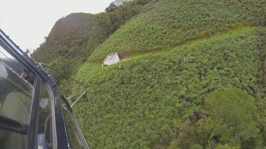 Plantação com quase 7 mil pés de maconha é encontrada em MG