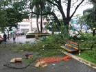 Duas adolescentes ficam feridas após queda de  árvore em Ijuí, RS