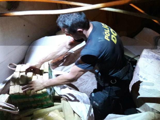 Quase 2t de maconha estavam escondidas em meio a carga de milho (Foto: DOF/Divulgação)
