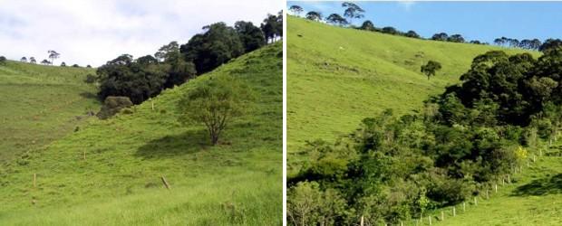 Nascentes recuperadas em Extrema (antes e depois do projeto municipal) (Foto: Secretaria de Meio Ambiente de Extrema)
