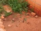Cadela morre após maus-tratos e mulher é presa em Uberlândia