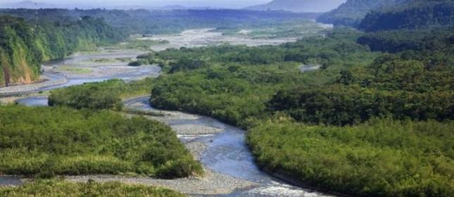 Polêmica no mercado da biodiversidade no Brasil (Foto: Thinkstock)