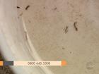 RS tem novos casos suspeitos de dengue, Zika vírus e chikungunya