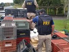 Polícia Rodoviária Federal encontra 560 kg de maconha em caminhão