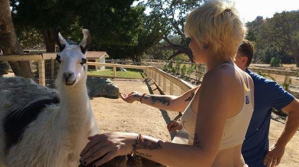 Paris Jackson brinca com lhama na Neverland (Foto: Reprodução)