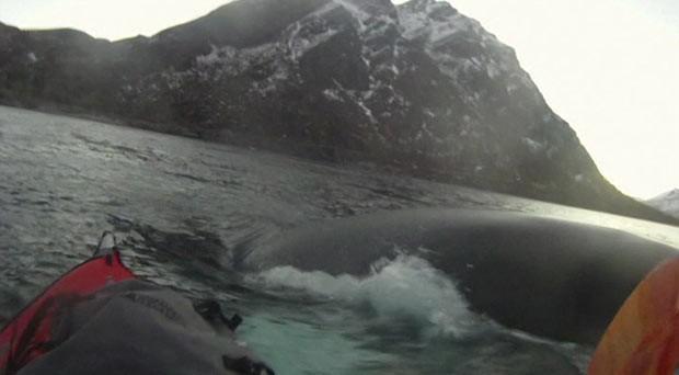 Homem em caiaque escapa por pouco de colisão com baleia (Foto: BBC)