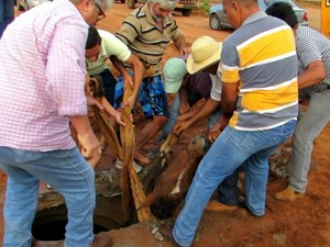 Nove moradores se reuniram para retirar o cavalo do esgoto (Foto: Rodrigo dos Santos/Rádio 90 FM)
