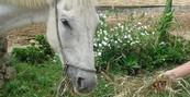 Cavalo ganha novo lar após abandono (Arquivo pessoal/Anderson Rodrigues)