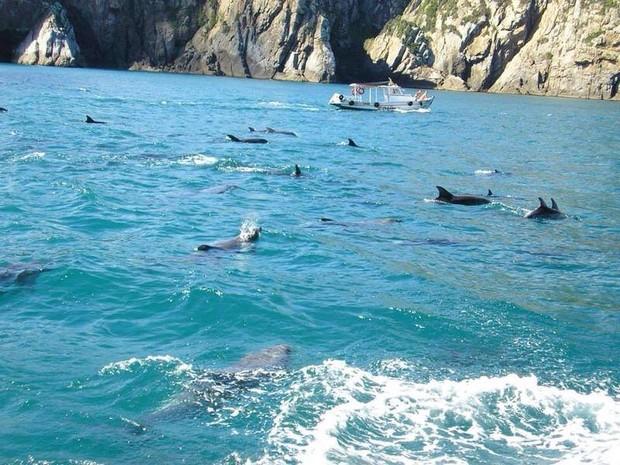 Registro feito por outro instrutor de mergulho mostra outro grupo de golfinhos (Foto: Davi Vianna/ Arquivo)