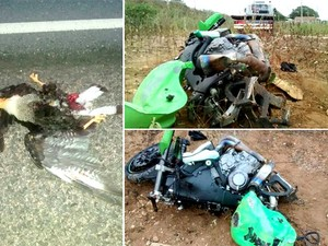 Ave que causou a queda e vitimou o motociclista também morreu; veículo ficou completamente destruído (Foto: Marcelino Neto/OCâmera)