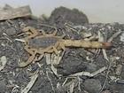 Menina picada por escorpião em Olímpia sai da UTI e vai para quarto