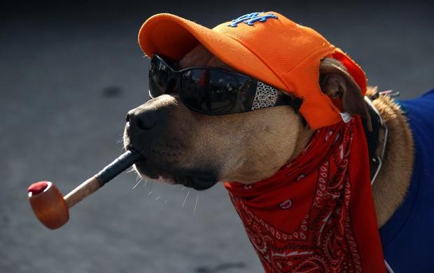 Com óculos escuros, cachimbo, boné e até lenço, cachorro foi flagrado durante evento em Nova York, nos EUA  (Foto: Bruce Bennett/Getty Images/AFP)