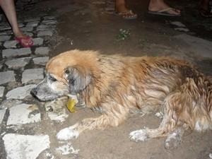Cachorro morre após ser espancado em Apodi (Foto: Márcio Morais)