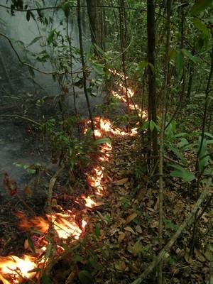 Incêndio acidental na floresta Amazônica do Pará. Fogo é uma das principais causas da degradação florestal (Foto: Jos Barlow / Divulgação)