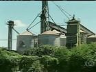 Produtores de MG denunciam desvio de toneladas de milho dos armazéns