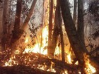 Incêndio em Sooretama, ES, dura 12 dias e mobiliza 150 homens
