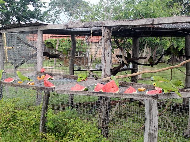 No processo de soltura, cercado de tela que abriga as aves é aberto no período da manhã. (Fot Ingrid Grahn/Arquivo pessoal)