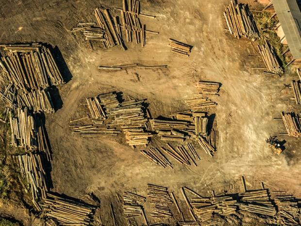 Terra indígena no Maranhão é alvo constante de madeireiros (Foto: Fábio Nascimento / Greenpeace)