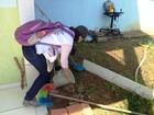 Alunos da Unir fazem estágio para combater o Aedes aegypti, em RO