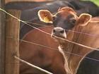 Antibióticos aumentam emissão de metano do esterco de animais