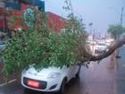 Árvore e estrutura de metal caem após chuva com ventos fortes na BA