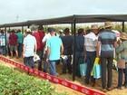 Eventos técnicos levam tecnologias e conhecimento aos agricultores