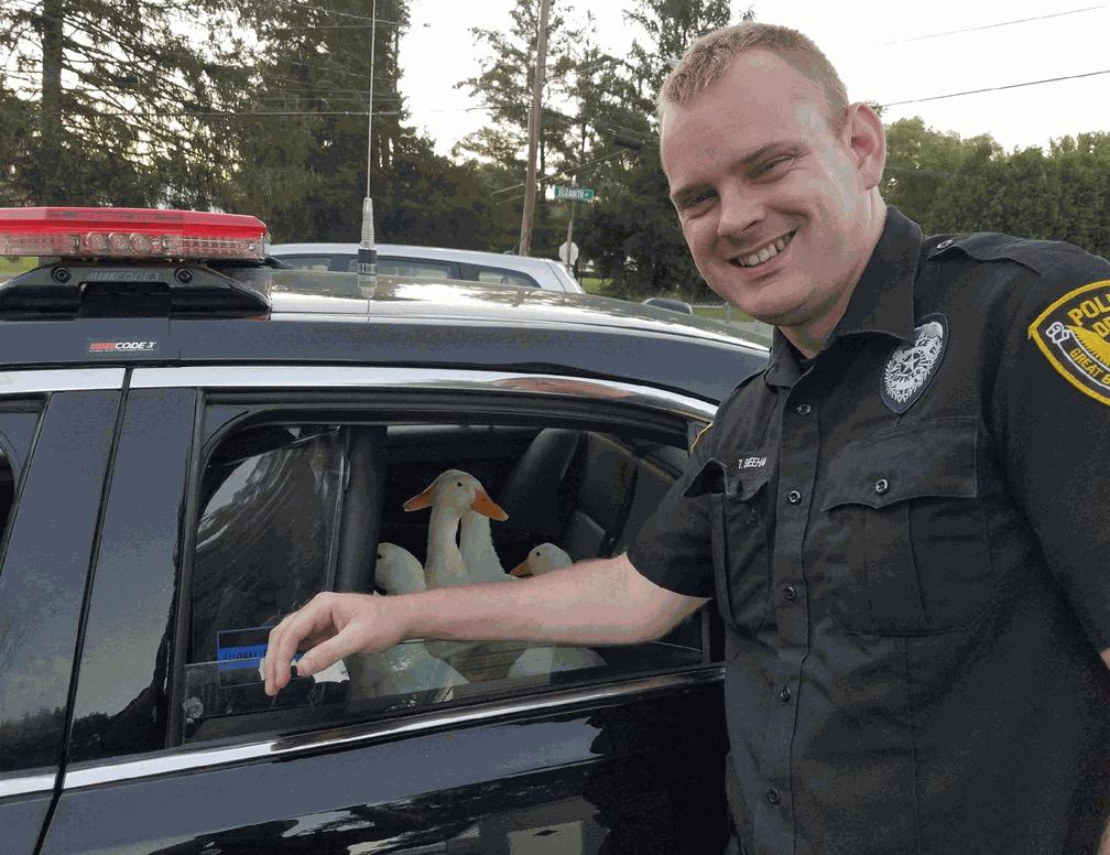 Polícia americana 'prende' patos que estavam 'vadiando' (Foto: Great Bend Police/Facebook)