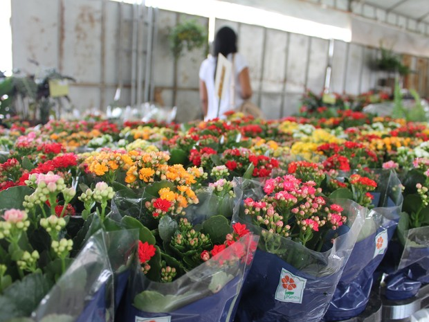 Feira de Flores e Plantas de Holambra na Praça Dom Malan em Petrolina (Foto: Yuri Matos/G1)