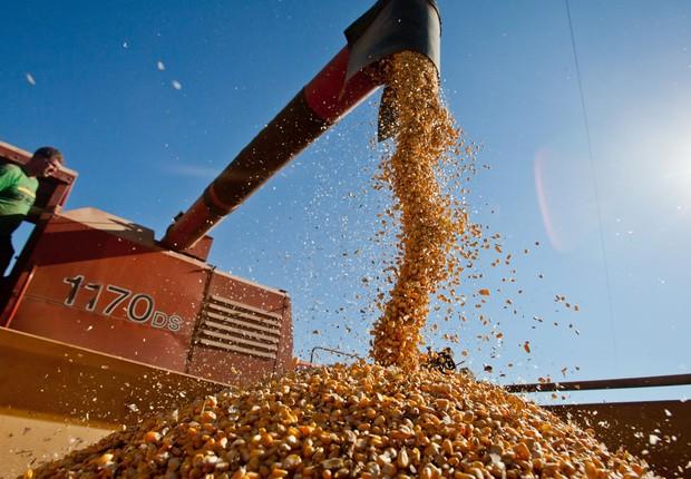 Colheita de milho em Sertão Santana, no Rio Grande do Sul (Foto: Pedro Revillion/Palácio Piratini)