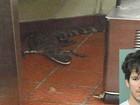 Jovem é indiciado por lançar jacaré vivo em restaurante nos EUA