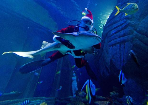 Papai Noel nadou abraçado com tubarão em aquário na Alemanha (Foto: Peter Kneffel/AFP)